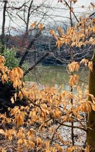strahl lake beech